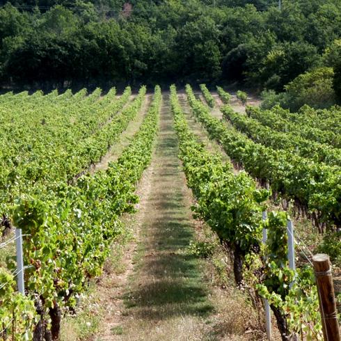 terroir-vigne